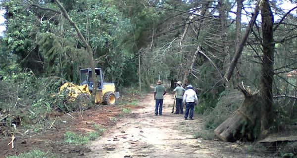 Defesa Civil e Secretaria Municipal de Serviços retiram árvores derrubadas por vendaval