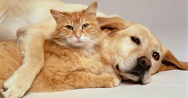 Prefeitura retoma programa de castração de cães e gatos
