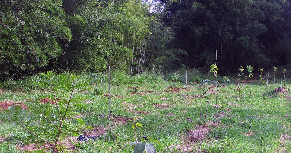 Área situada na microbacia do Rio do Peixe recebe plantio de 1.200 mudas de árvores nativas