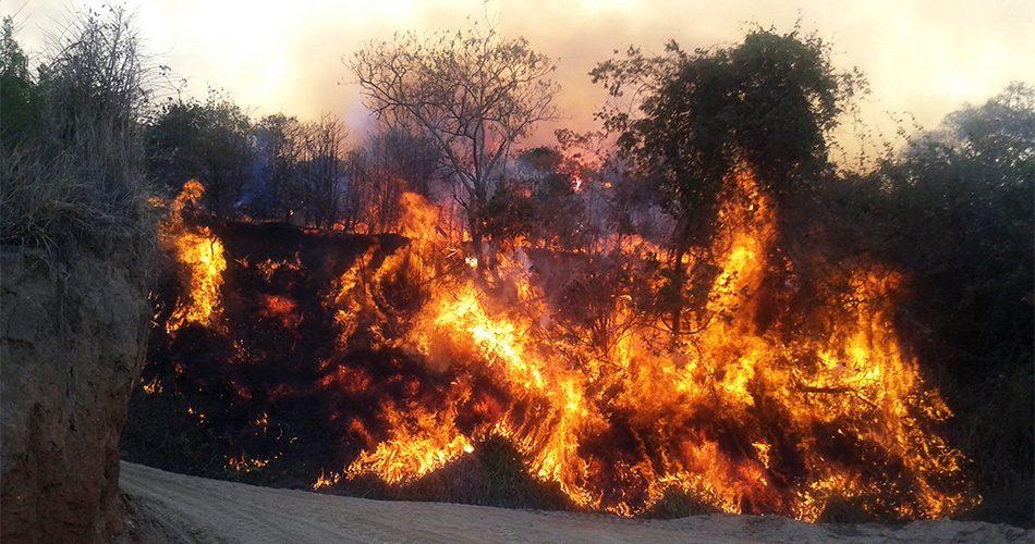Incêndios causados por ação humana configuram crime ambiental